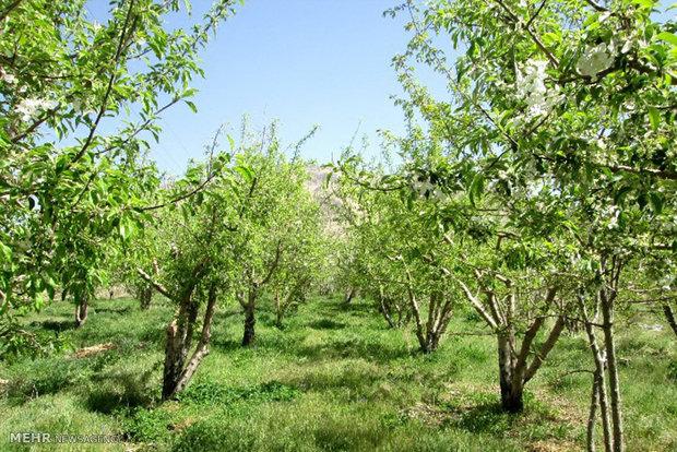 وضعیت باقیمانده سموم در سفره غذایی مردم/بررسی۲۴نوع محصول کشاورزی