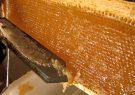 شهرضا رتبه سوم تولید عسل در اصفهان را داراست