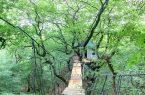 زندگی در خانه درختی برای نجات جنگل (+تصاویر)