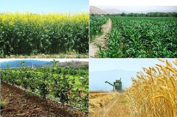 سه چالش بخش کشاورزی در سال ۹۸/ دستاوردهایی که چوب بیتدبیری خورد